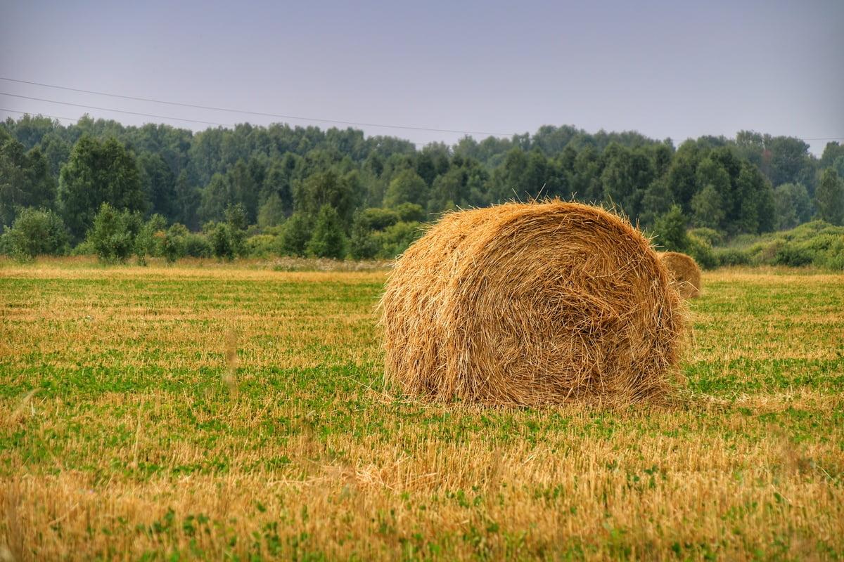 Рулон сена на поле