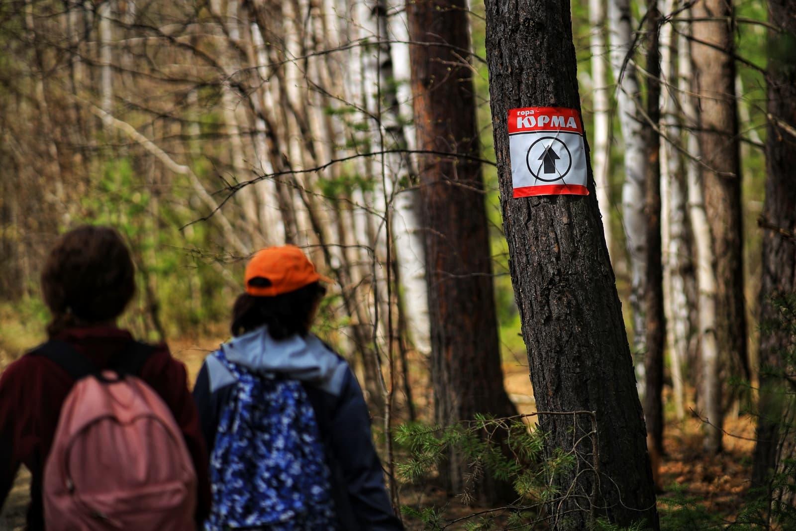 Указатель на Юрму на дереве