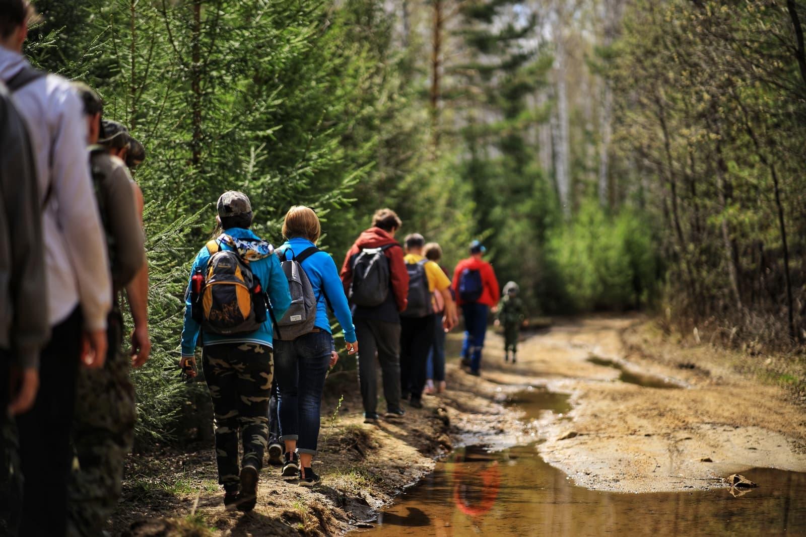 Туристы идут по тропе в лесу