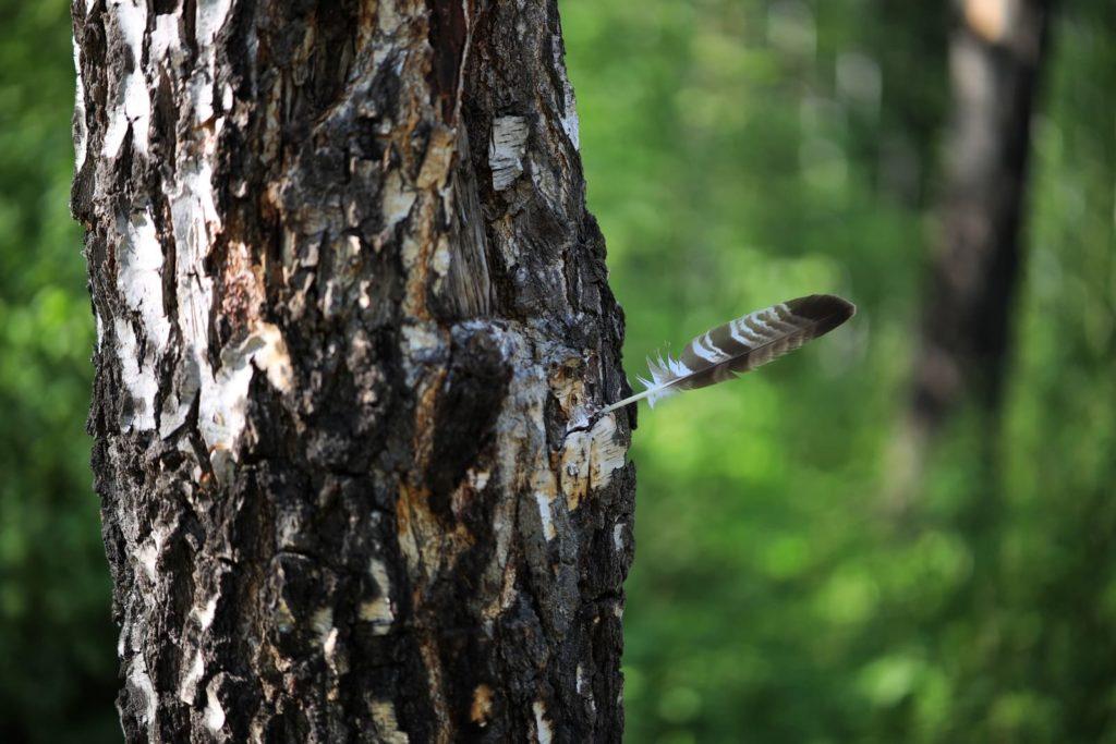 Перо птицы воткнуто в ствол дерева