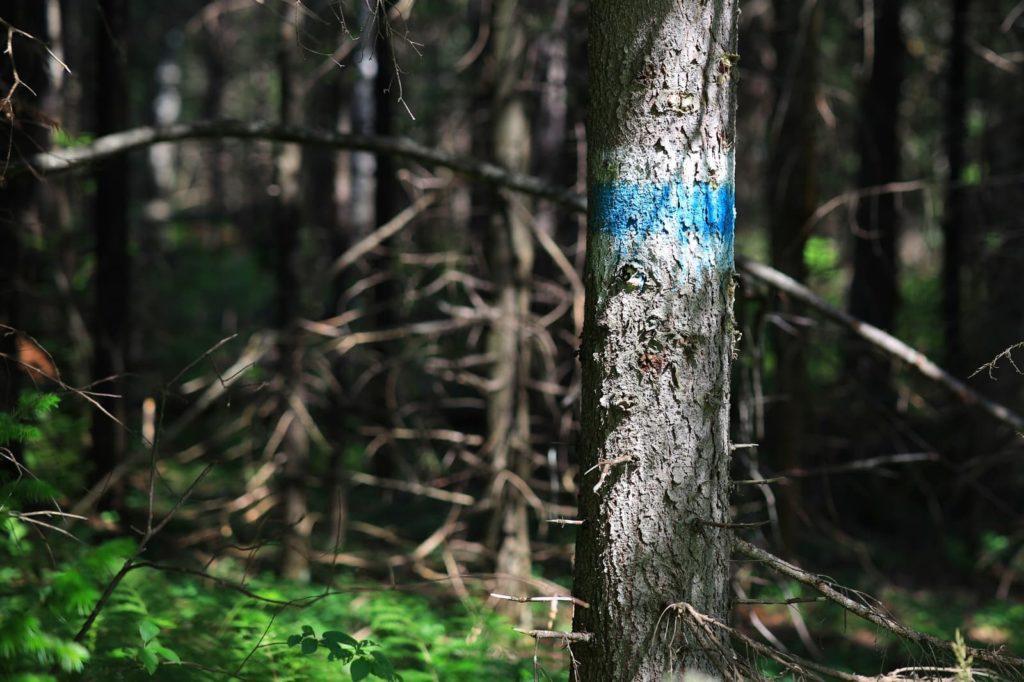 Ориентировочная метка на дереве